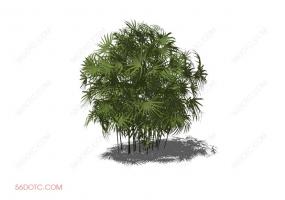 植物000267-SketchUp草图大师模型