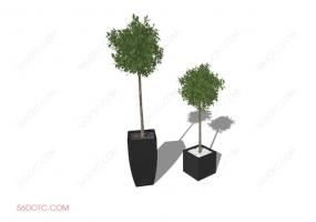 植物000272-SketchUp草图大师模型