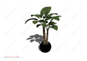 植物000274-SketchUp草图大师模型
