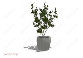 植物000275-SketchUp草图大师模型