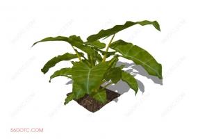 植物000276-SketchUp草图大师模型