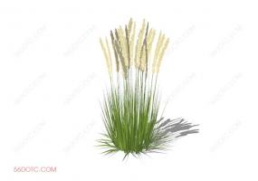 植物000277-SketchUp草图大师模型