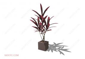 植物000278-SketchUp草图大师模型