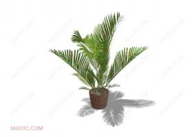 植物000280-SketchUp草图大师模型
