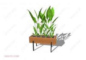 植物000281-SketchUp草图大师模型