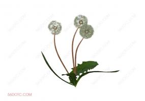 植物000283-SketchUp草图大师模型
