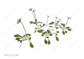 植物000287-SketchUp草图大师模型