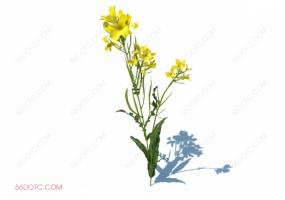 植物000288-SketchUp草图大师模型