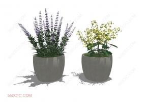 植物000293-SketchUp草图大师模型