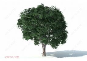 植物000297-SketchUp草图大师模型