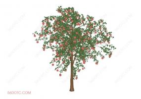 植物000302-SketchUp草图大师模型