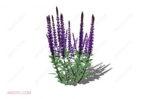 植物000305-SketchUp草图大师模型