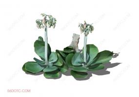 植物000309-SketchUp草图大师模型