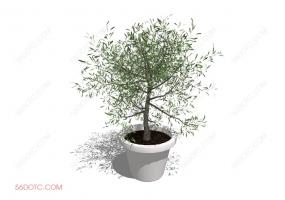 植物000310-SketchUp草图大师模型