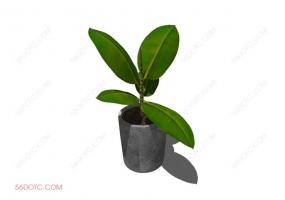 植物000311-SketchUp草图大师模型