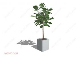 植物000312-SketchUp草图大师模型