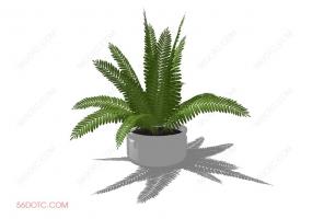 植物000313-SketchUp草图大师模型