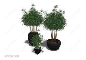 植物000314-SketchUp草图大师模型:盆栽绿植