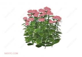 植物000315-SketchUp草图大师模型:室外花卉