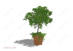 植物000316-SketchUp草图大师模型:盆栽果树