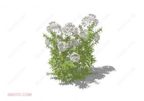 植物000317-SketchUp草图大师模型:室外花卉