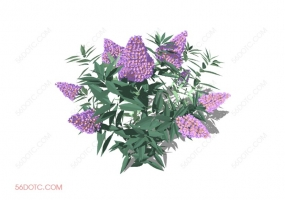 植物000319-SketchUp草图大师模型:室外花卉
