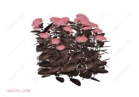 植物000320-SketchUp草图大师模型:室外花卉