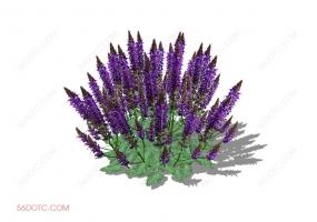 植物000321-SketchUp草图大师模型:室外花卉