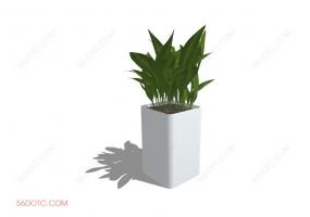 植物000381-SketchUp草图大师模型