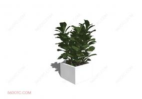 植物000382-SketchUp草图大师模型