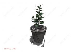 植物000385-SketchUp草图大师模型