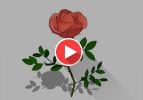 SketchUp玫瑰花建模教程